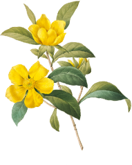 botanical 03